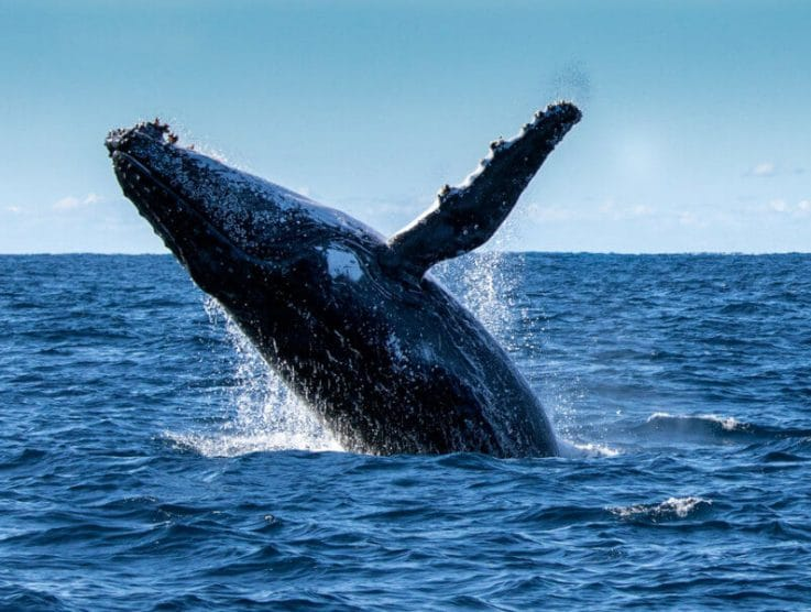 Bitcoin Has Fallen, and Whales Are Zoning In